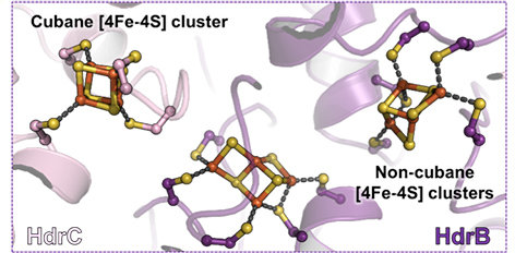 "<div style=""text-align: justify;"">Differences between the ""classic"" cubane iron-sulfur cluster and the newly discovered non-cubane iron-sulfur cluster. Yellow and orange spheres correspond to sulfur and iron respectively.</div>"