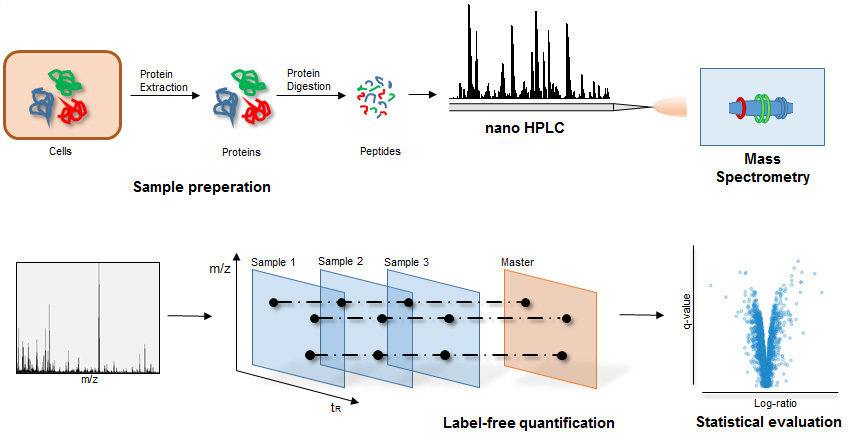 an experiment to separate proteins according to their mass and charge A total of 34 proteins were detected by lesa faims mass spectrometry imaging of mouse brain, of which 26 were  formation of singly charged ions hence the analysis of such  experiment and 19 separate species between 4−17 kda in the  lesa faims msi experiments according to location, as.