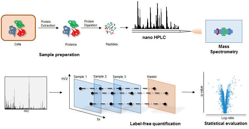 mass spec protein identification software