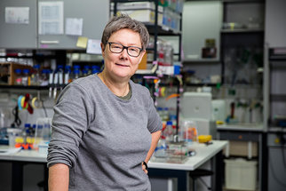 Bacterial adaption & differentiation - Prof. Dr. Lotte Sogaard-Andersen